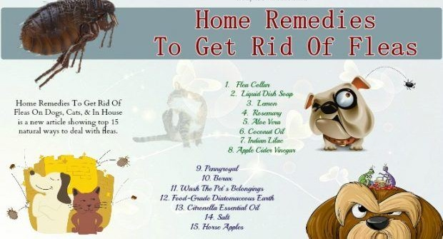 FLEAS HOME REMEDIES- SIMPLE AND NATURAL WAYS TO KEEP THEM AWAY